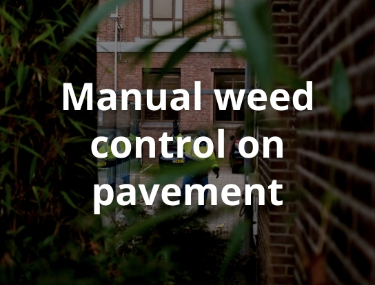 Manual weed control on pavement