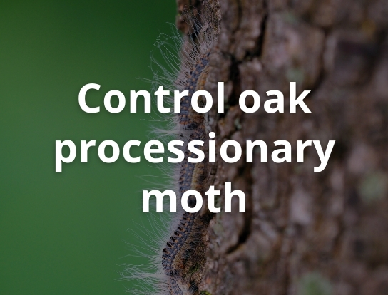 Control oak processionary moth